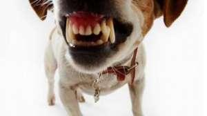 如何纠正狗狗的护食行为